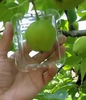 shaping square apple