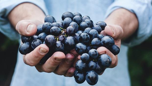 Croatian Wines - Grapes