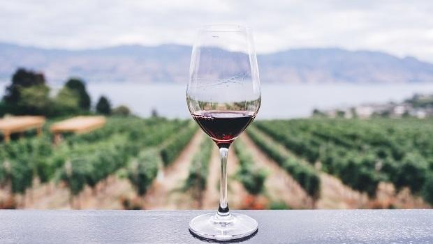 Croatian Wines - Vineyard